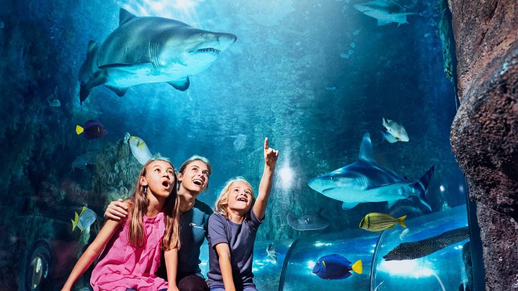 Kom tæt på hajer på Kattegatcentret