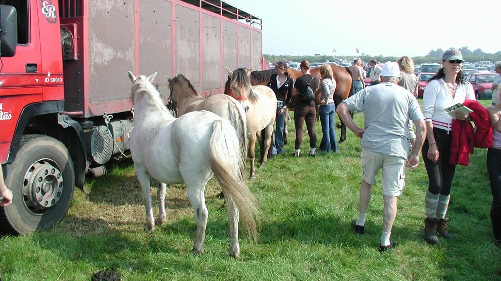 Korskro Pferdemarkt | VisitRibeEsbjerg