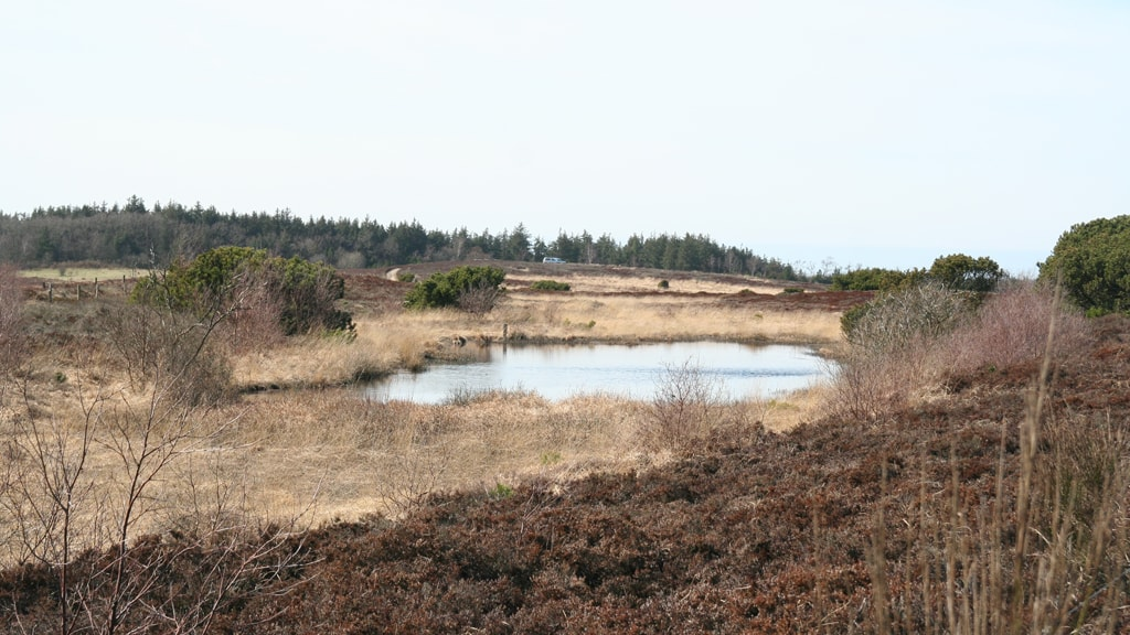 Hut in Marbæk Plantation near Esbjerg