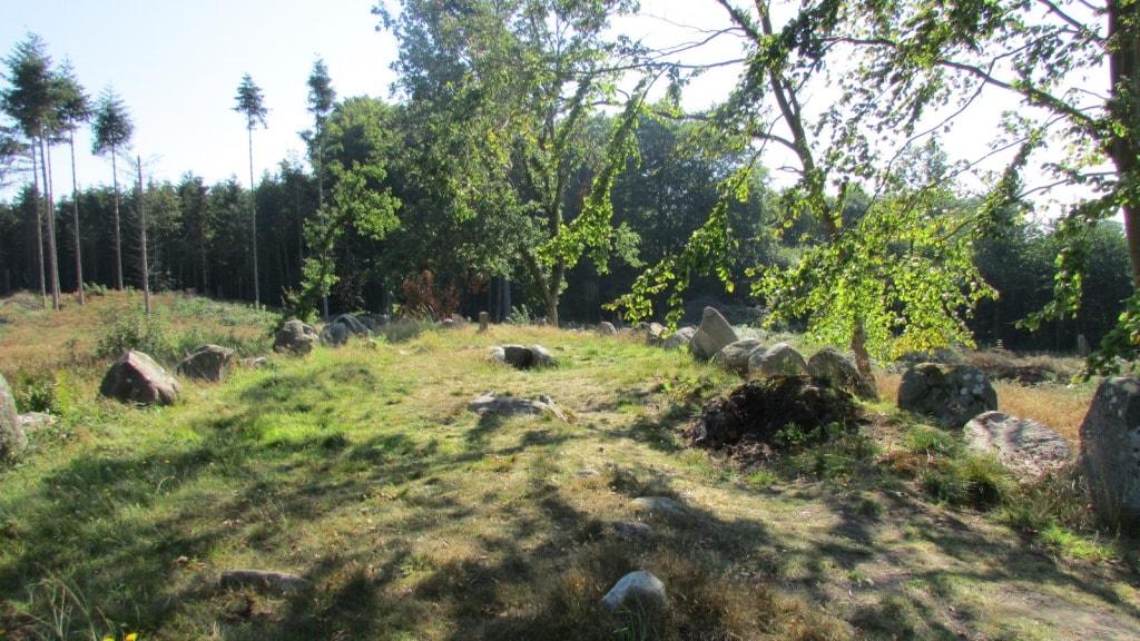 pipstorn skov