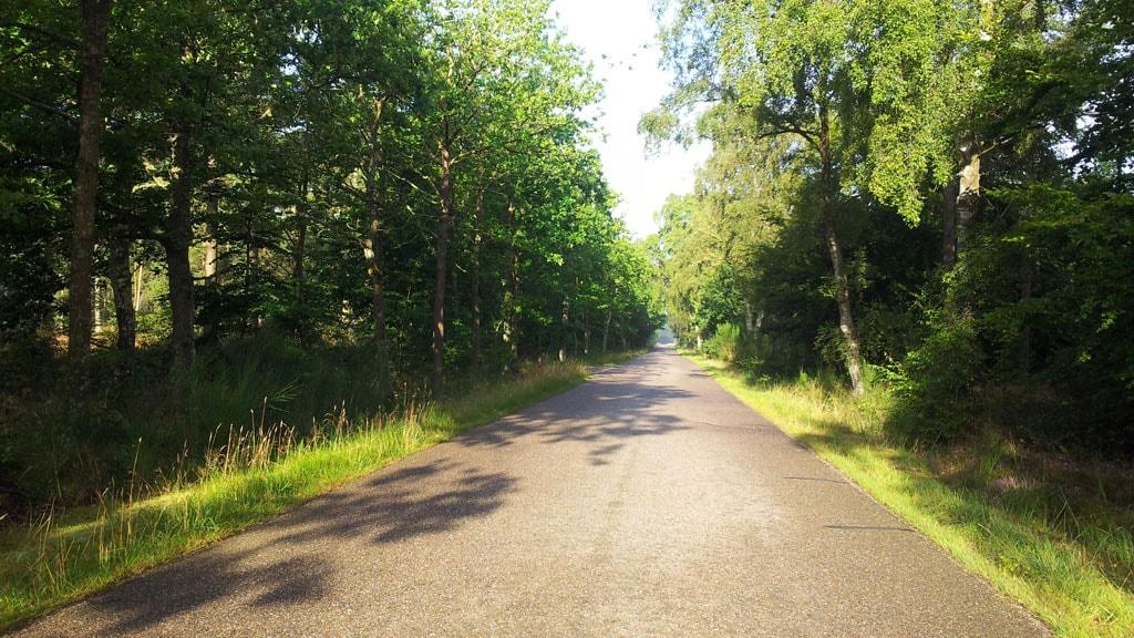 Uggerby Klitplantage
