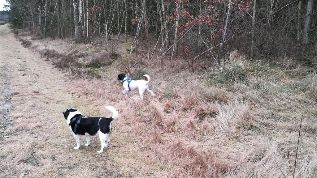 Hundeskoven i Folkeparken