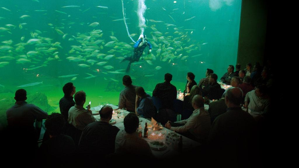 Cafe Nordsøen, Nordsøen Oceanarium, Hirtshals