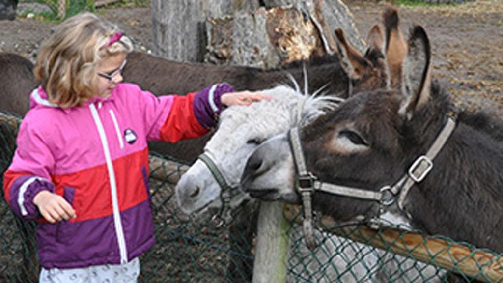 Dyreparken NBV Hjørring
