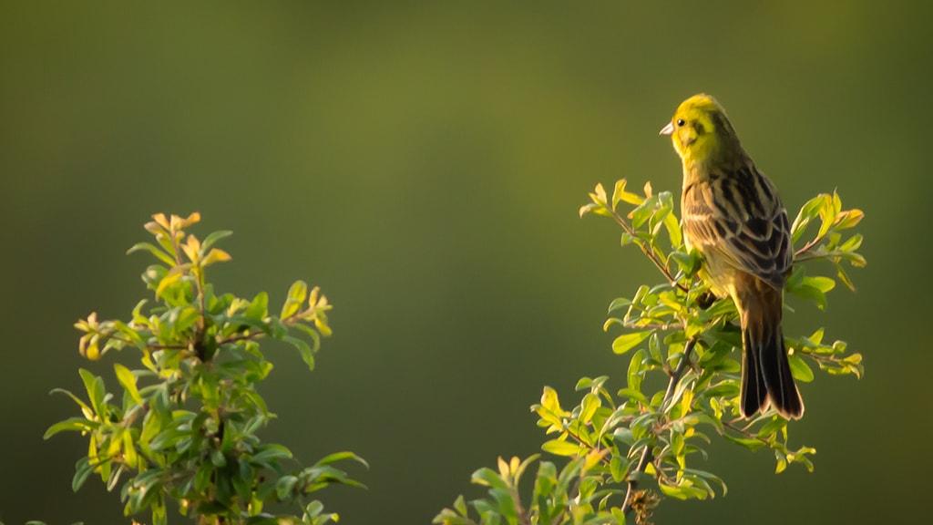 Fugl i Jyderup af Mikael Knøfler