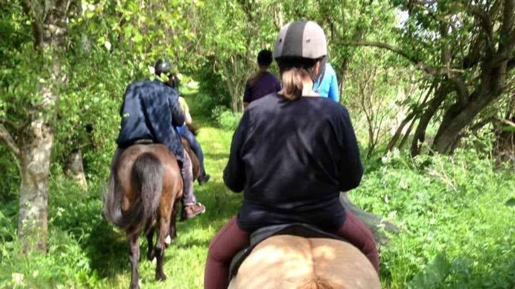 Horse riding in the forest by Åmose Nature Camp