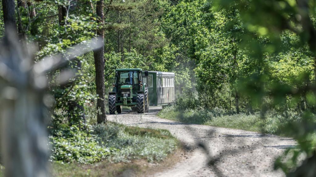 Natursafari med traktorbus