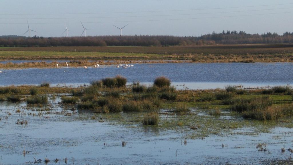 Vådområde ved Kytterup