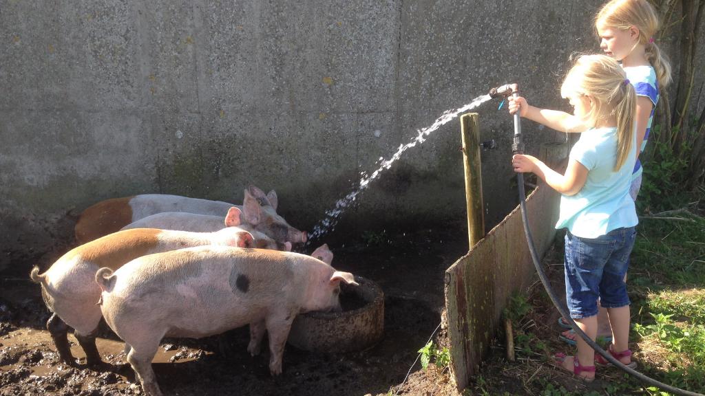Ledgaard grise og børn
