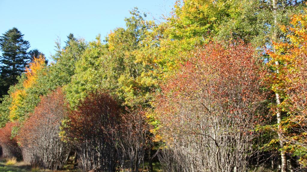 Skov i efterårsfarver
