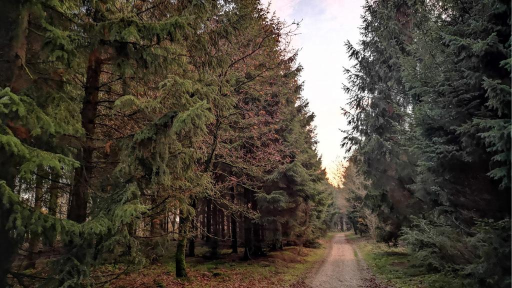 Hjertestien med træer