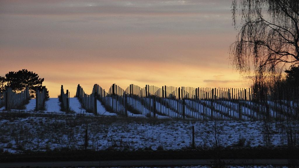 Vinterrundvisning på Vingaarden