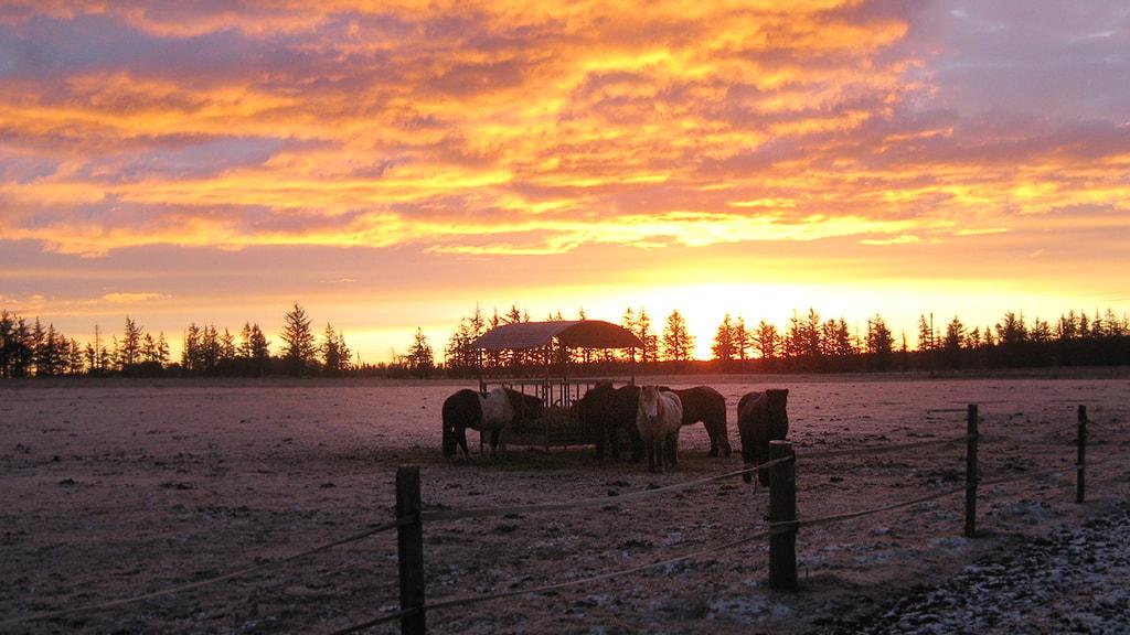 Mølgaard Ridecenter solopgang