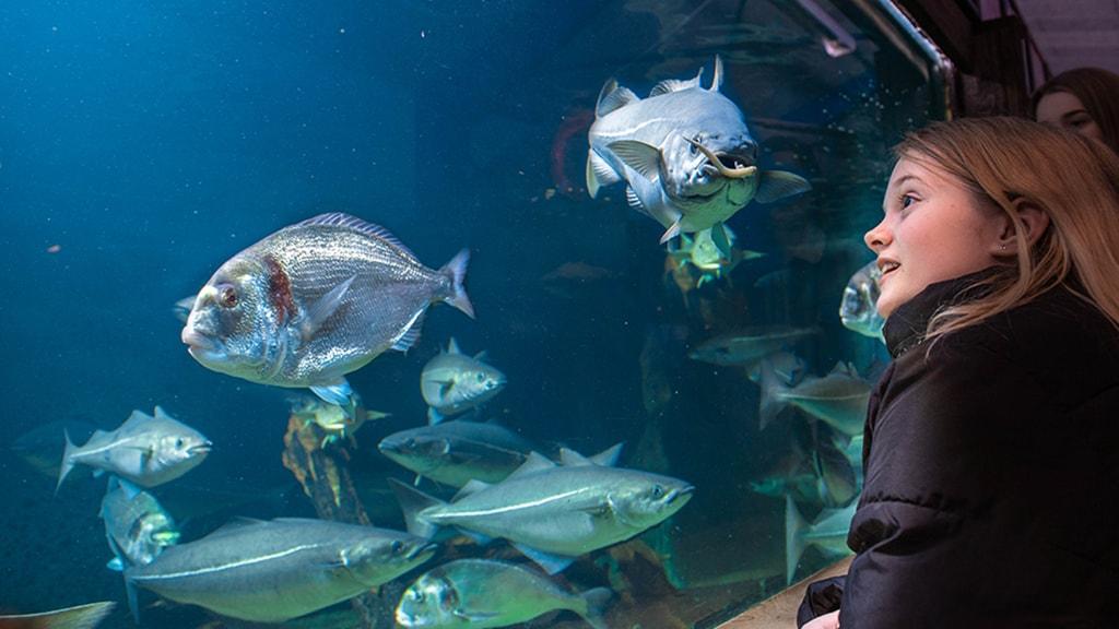 Oplev det magiske liv under vandoverfladen