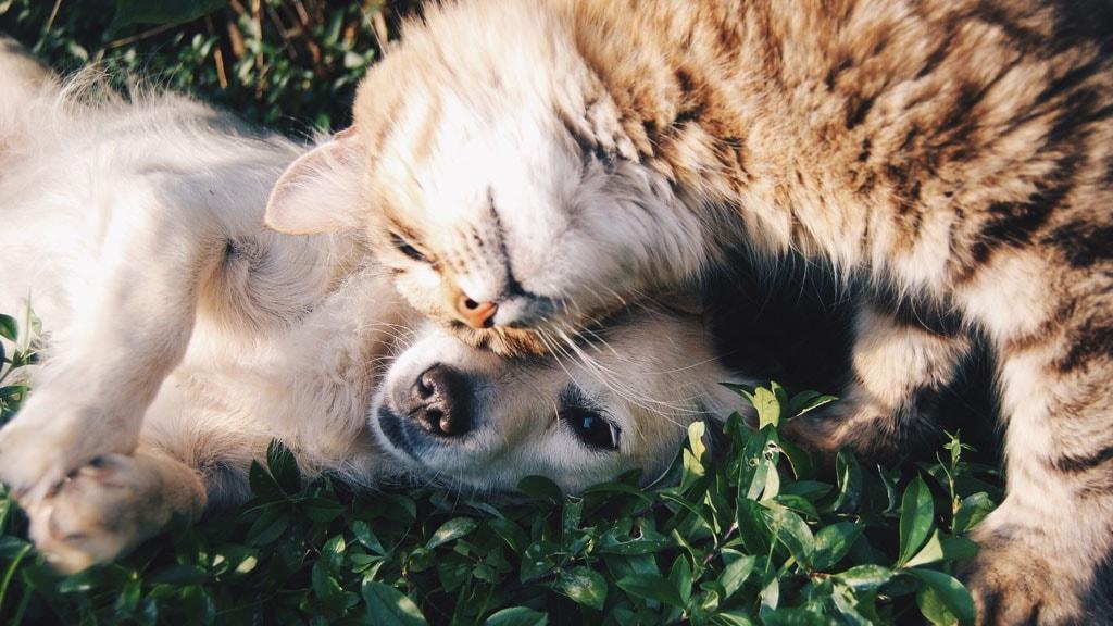Hund kat dyrelæge dyreklinik