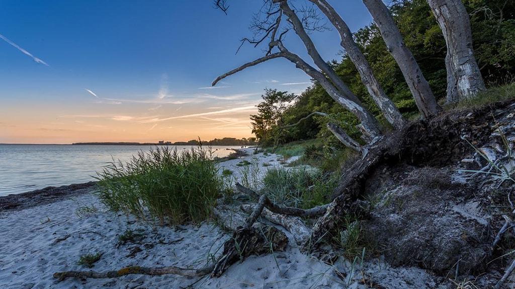 Strandskoven Faxe Ladeplads Fotograf Tage Klee