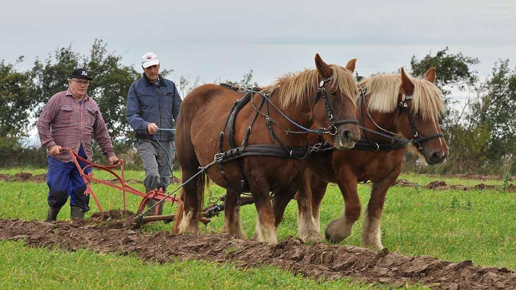 Pløjedag med Jyske Heste på Nordfyn