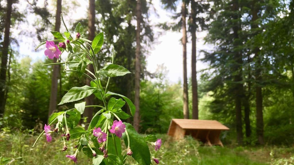 Shelter i Ravnebanke Skov