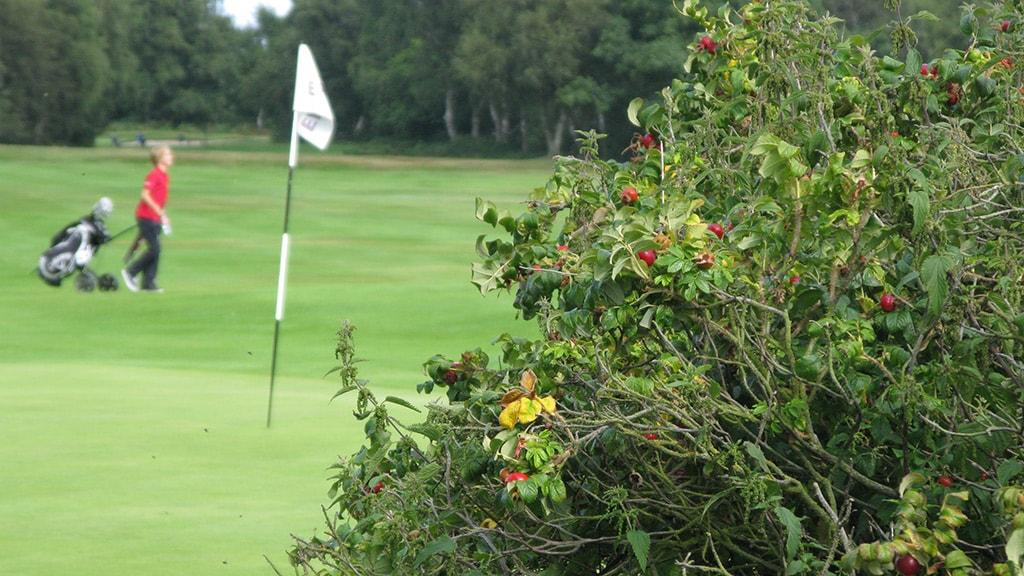 Sct Knuds Golfklub Nyborg hul 2