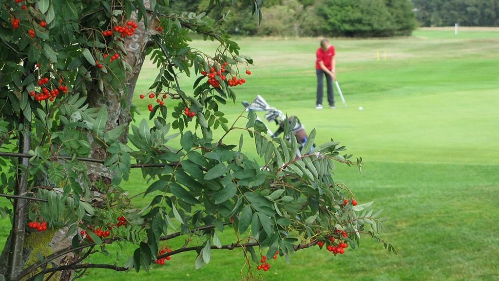 Sct Knuds Golfklub Nyborg hul 3