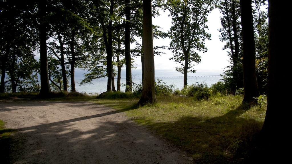 Nyborg Fyn Danmark Teglværksskoven
