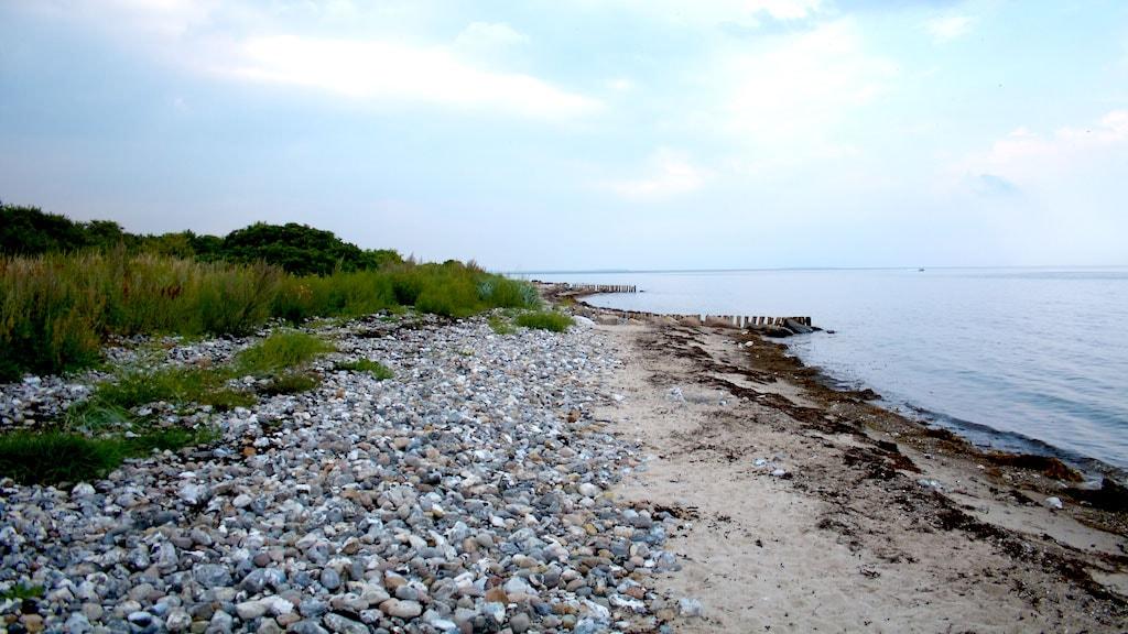 Nyborg Fyn Danmark Grønnehave Strand