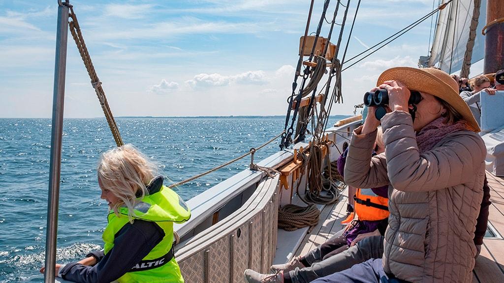 ADP sejltur på Storebælt med kikkert