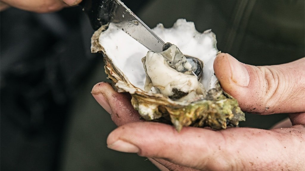 Oyster from the Wadden Sea | VisitRibeEsbjerg