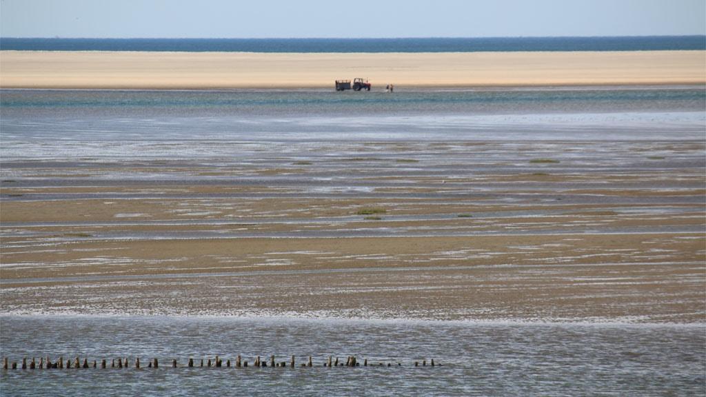 Sandbanken Koresand | Mandø