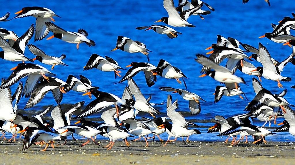 Zugvogel am Wattenmeer