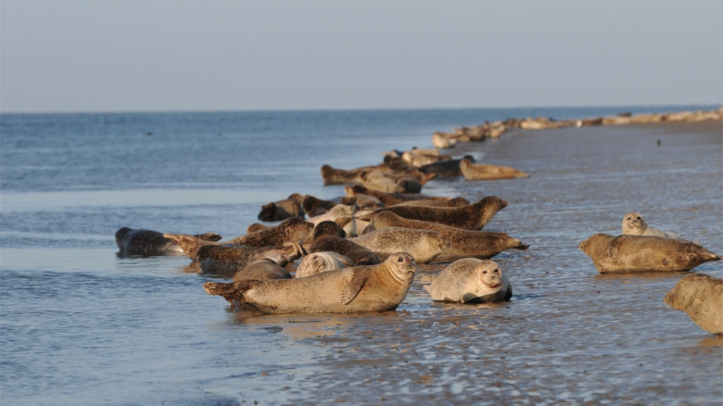 See the seals in the Wadden Sea National Park