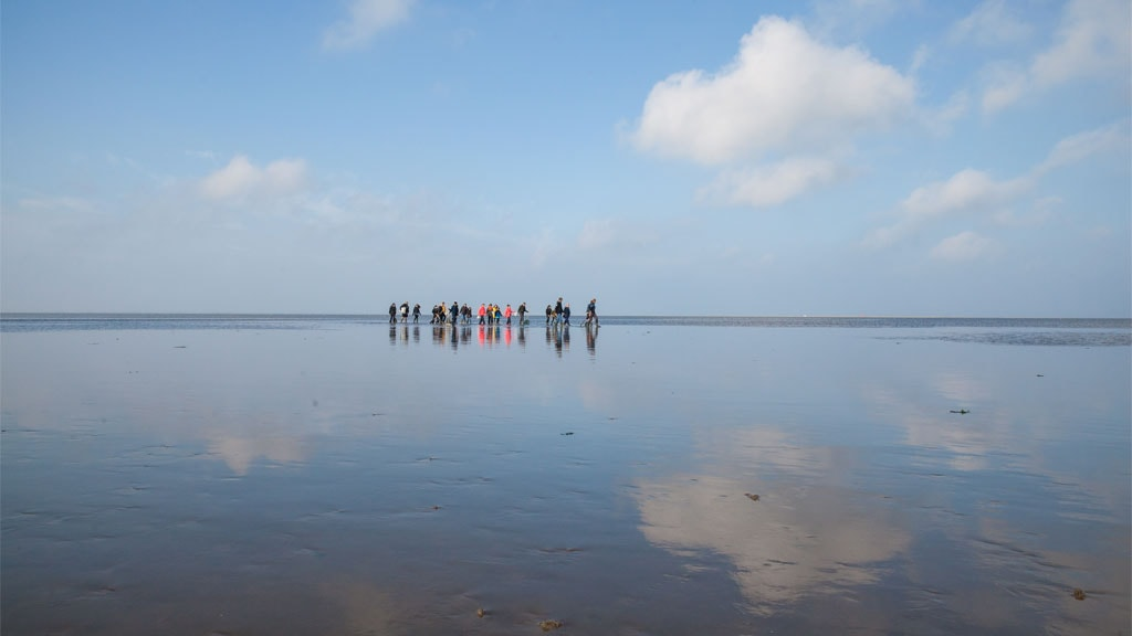 Wadden Sea trip | Meet & More by the Wadden Sea