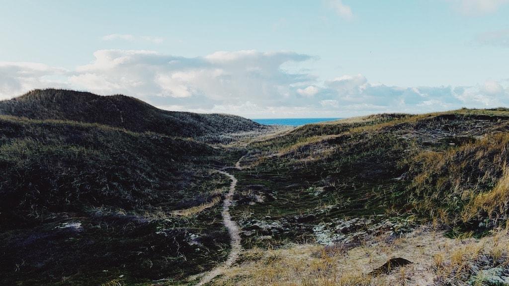 Udsigt over Lodbjerg Klithede og Vesterhavet i Nationalpark Thy.