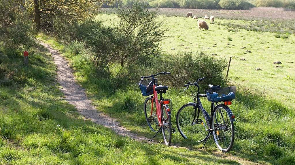 Cykelture i  flot natur