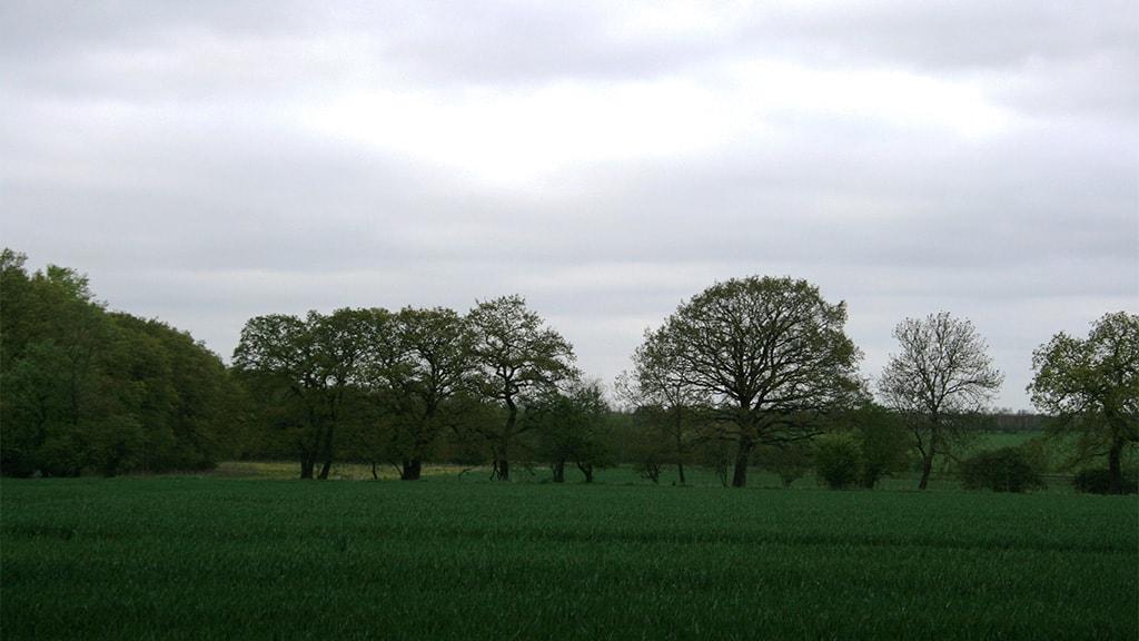 Hedgerows between Askov and Vejen