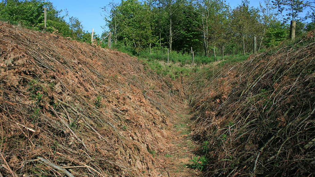 Pansergraven i Lintrup
