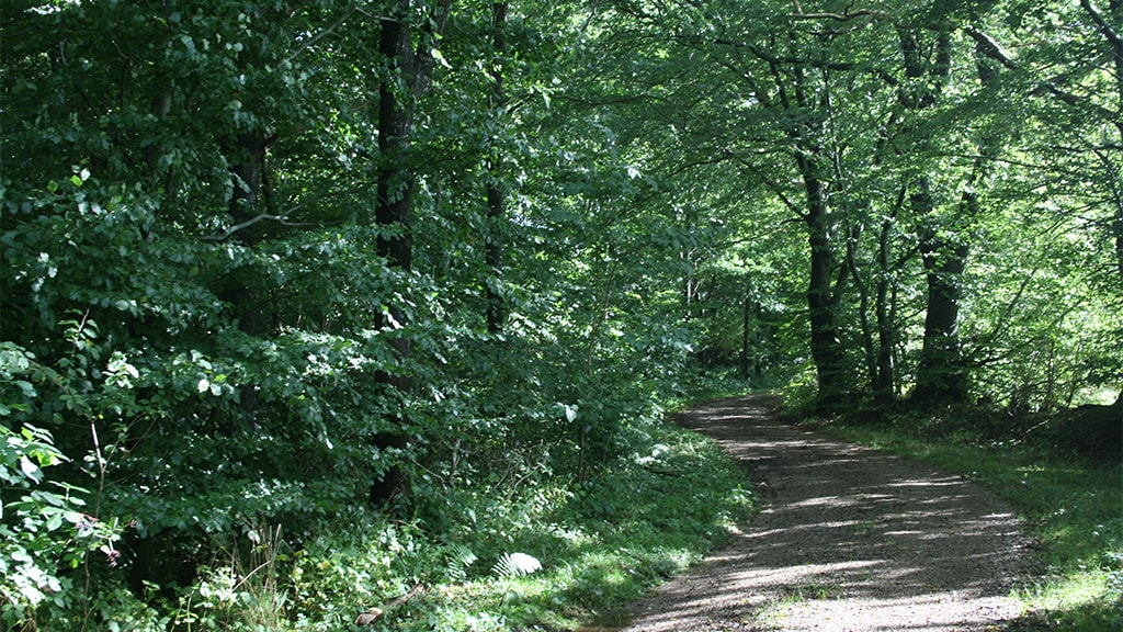 Skovens katadral ved Jels