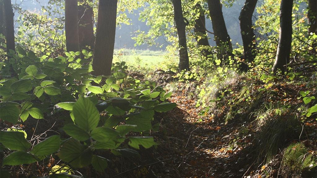Sommerlystskoven, Rødding