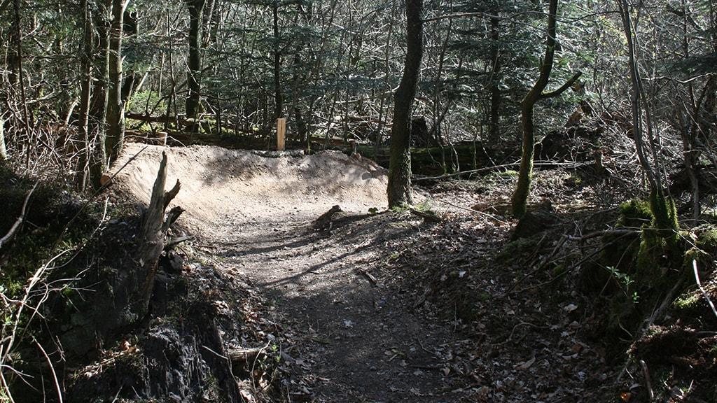 Mtb track Stursbøl Jels