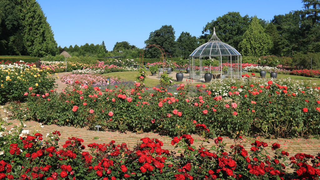 The Rose Garden in the Geographical Garden