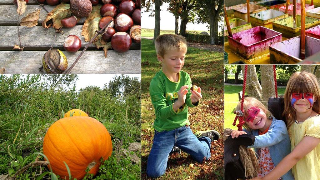 kastanielys-halloween-graeskar-kastanier-farv-lys-aktiviteter-for-boern-uge-42