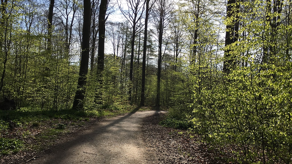 Skov i Aarhus