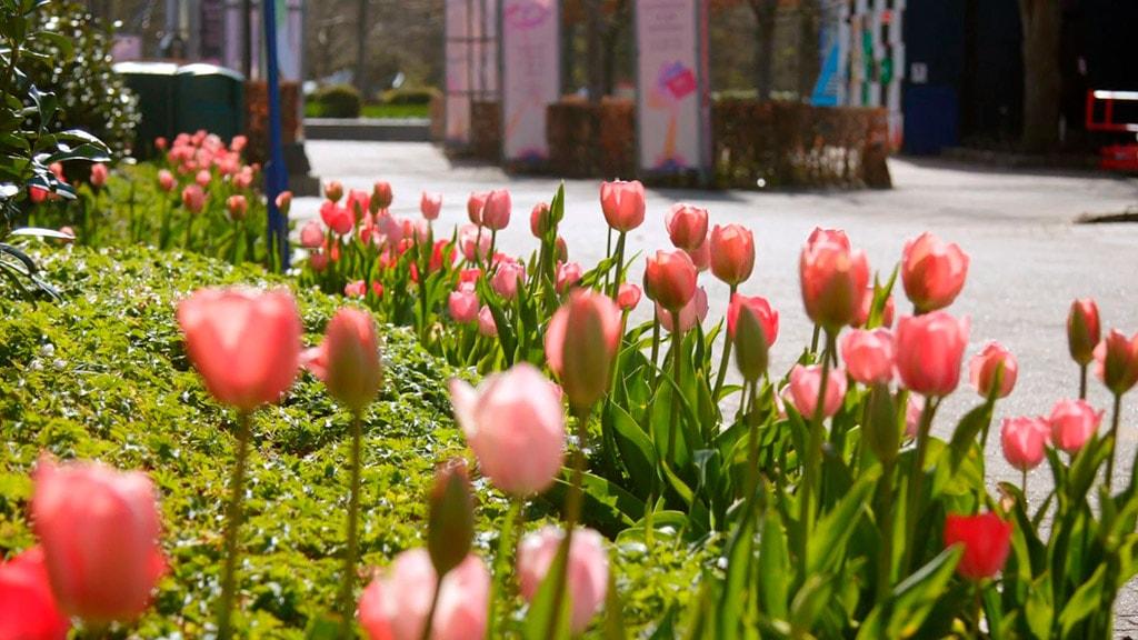 Tivoli Friheden blomsterfestival